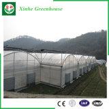 Film-Plastikdeckel-Gemüse-Gewächshaus des Tunnel-PO mit Wasserkultursystem