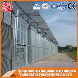 HandelsVenlo galvanisiertes Stahlrahmen-Polycarbonat-grünes Haus