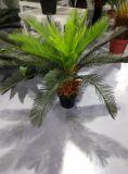 Plantas artificiales superventas del Cycas grande Jf13010747 H: el 160cm