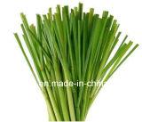 Petróleo esencial natural puro de la hierba de limón de la fuente de la fábrica, petróleo del Cymbopogon