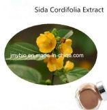 5:1 dell'estratto di Cordifolia del Sida di perdita di peso degli alcaloidi di 10%