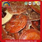 La salud alimentaria Anti-Cancer Salud Alimentaria de hierbas naturales Anti-Cancer Extracto de hongos Reishi, lúcido, Ganoderma Ganoderma