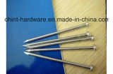 Fabrik-Hersteller-Draht-Kohlenstoff-Eisen-Common-Nagel