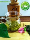 Tè organico verde