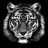 白黒野性生物のトラの肖像画のキャンバスの芸術プリント