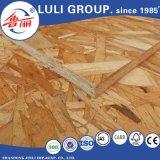 1220X2440mm Bonne qualité WBP Glue OSB Board for Construction
