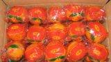 Сладкий вкус свежих пупка оранжевого цвета