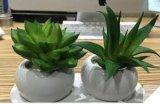 Plantas y flores artificiales de Gu824120034 suculento