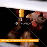 Tianrui горячая продажа автоматическая птицы фермы аккумулятор куриные каркас для продажи