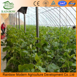 安い価格の太陽温室を植える容易なインストールいちご