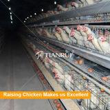 Um tipo gaiola de galinha barata automática para galinhas poedeiras/camadas /Chickens