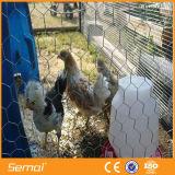 Ячеистая сеть курятника цыпленка