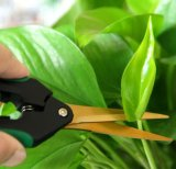Прямая утеска режет ножницы подрежа сад флористических бонзаев Hydroponic