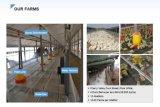 Фабрика 8-10cm Китая помыла белое перо гусыни