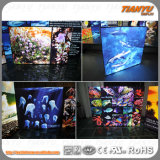 China Light Aluminium Fabric Light Box