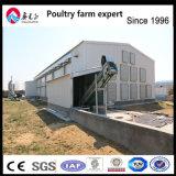 Couche contrôlé complet de la Volaille Poulet à la Chambre d'équipement agricole