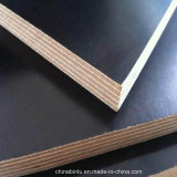 La película del negro del álamo de la madera de los materiales de construcción hizo frente a la madera contrachapada