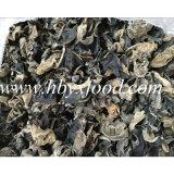 Agaric, fatias Fungus pretas naturais verdes orgânicas secadas