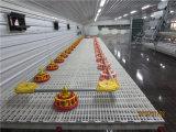 Customized Prix bas Steel Structure Chicken House avec tous les équipements H / un type Cage Layer Icubator