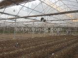 Formule européenne multi-span film serre agricole