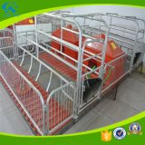 Erhaltungs-Bereich-Pflanzenschule-Rahmen-Schwein-Säen-Bett
