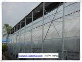 Chambre verte de film d'usine de la Chine hydroponique pour la tomate