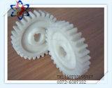 Rotella di attrezzo di nylon di PA di lubrificazione ad alta resistenza di Slef