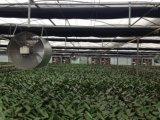 Extractor industrial barato de la azotea de Guangdong Yoshimura