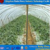 Multispan kommerzieller Plastikfilm-Tunnel-grünes Haus für Tomate
