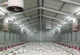 가벼운 프레임 강철 구조물 닭 농장