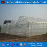 Serre van de Bladen van het Polycarbonaat van de Serre van Multispan de Landbouw