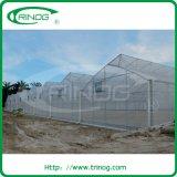 Hydroponics commerciale Greenhouse per Lettuce