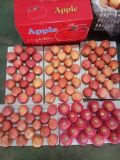 SGS fresco Inspectioned FUJI de papel Apple para Indonesia