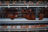 タイプかフレームの層の鶏のケージシステム
