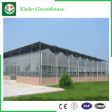 Serre chaude de feuille de polycarbonate d'acier inoxydable d'agriculture