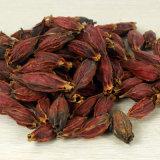 Usine extrait de plante naturelle d'alimentation Cape Jasmine Extrait de fruits