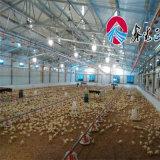 L'équipement automatique de l'Aviculture pour éleveur de poulets de chair de poulet