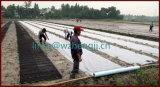 Tela não tecida dos PP da resistência UV durável Eco-Friendly para Agricultue