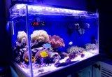 90cm 108W Blanc + Eclairage LED Aquarium Bleu pour Fish Reef Tank