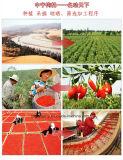Organische getrocknete Goji Beere, USDA, FDA, EU, rein