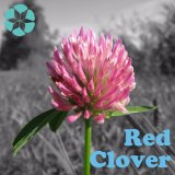 Extrait de trèfle rouge / Extrait de Trifolium Pratense / Isoflavones