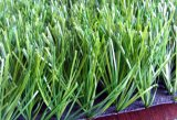 Ландшафтом и декорированных травы