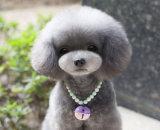 محبوبة يرصّع عقد شريكات كلب مجوهرات [بلّس] يخابر شريكات