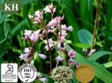 Estratto naturale /Folium Apocyni Veneti P.E del foglio dell'apocino di 100%