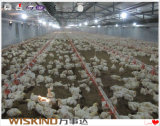 Cheap Poultry Chicken House Exported to of Africa