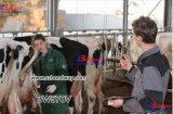 Vétérinaire numérique équine, bovine, canine, Faline, le Lama échographe