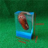 Custom Obejects encajonado acrílico transparente incrustación