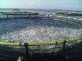 Cage de flottement de pisciculture de cage de pêche de HDPE en mer