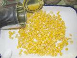 maïs doux de grain en boîte par 340g par saison neuve