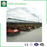 야채를 위한 폴리탄산염 온실 또는 꽃 또는 정원